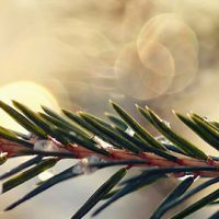 december-events
